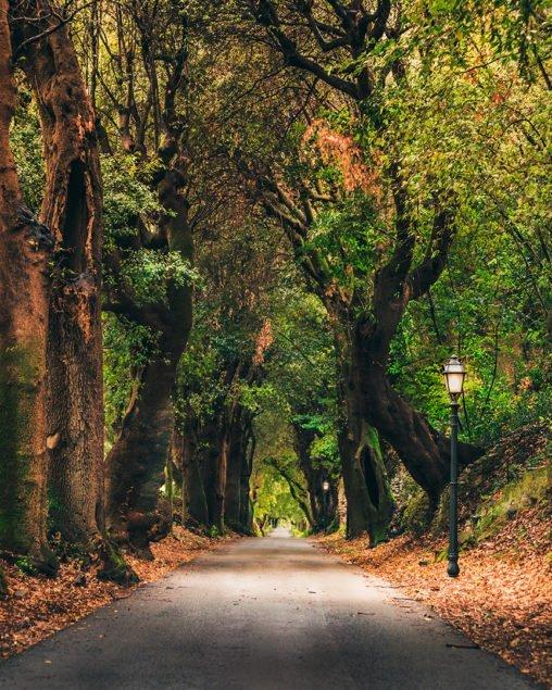 Viale alberato a Castel Gandolfo