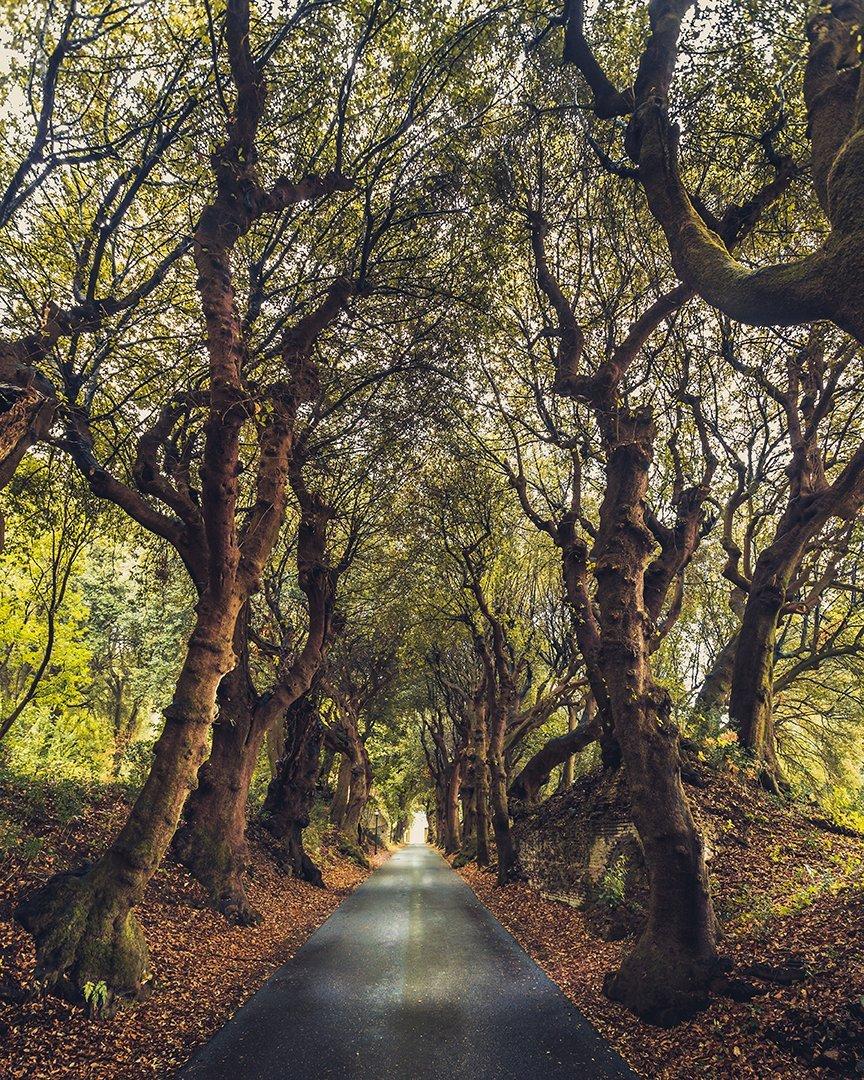 Gli alberi di Castel Gandolfo